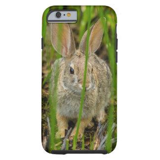 Coque Tough iPhone 6 Lapin de lapin de désert