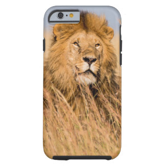 Coque Tough iPhone 6 Lion masculin caché dans l'herbe