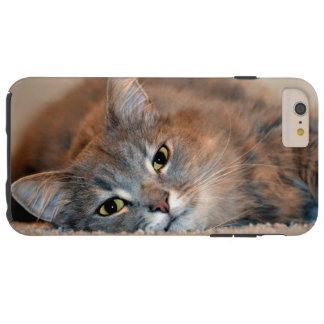 Coque Tough iPhone 6 Plus Gris, Tan, chat aux cheveux longs blanc par