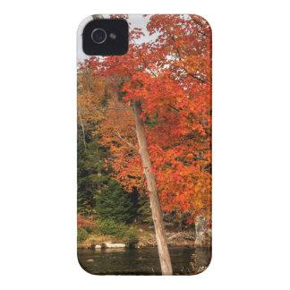 Coques Case-Mate iPhone 4 Automne d'Adirondack