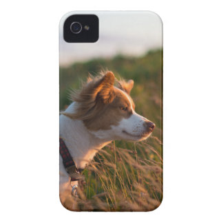 Coques Case-Mate iPhone 4 chien