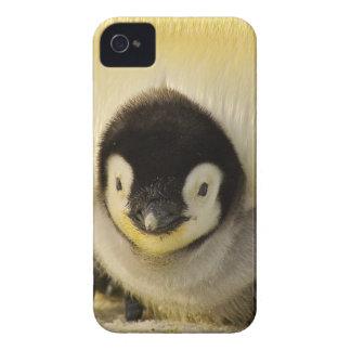 Coques Case-Mate iPhone 4 Empereur animal de la vie antarctique de bébé de