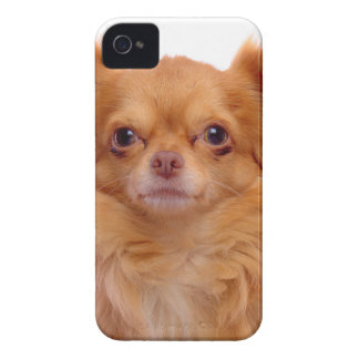 Coques Case-Mate iPhone 4 gingembre