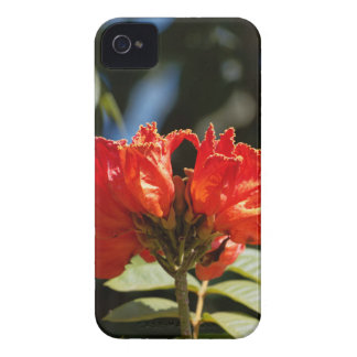 Coques Case-Mate iPhone 4 iFlowers d'un tuliptree africain