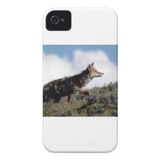 Coques Case-Mate iPhone 4 Un coyote marche en parc national de Yellowstone,
