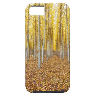 Coques Case-Mate iPhone 5 Ferme d'arbre de peuplier dans Boardman Orégon
