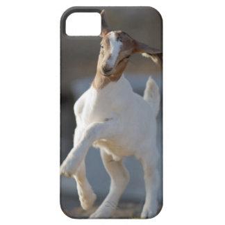 Coques Case-Mate iPhone 5 Jeu de chèvre d'enfant
