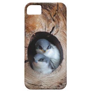 Coques Case-Mate iPhone 5 Oiseaux de bébé