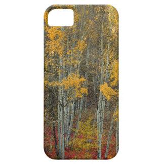 Coques Case-Mate iPhone 5 Région sauvage de forêt d'Aspen