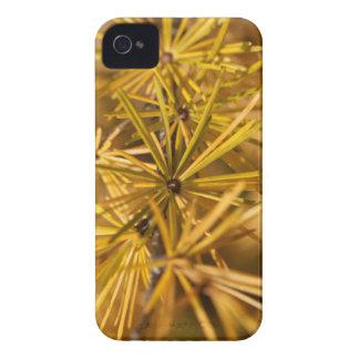 Coques iPhone 4 Case-Mate Aiguilles jaunes de mélèze (Larix decidua)