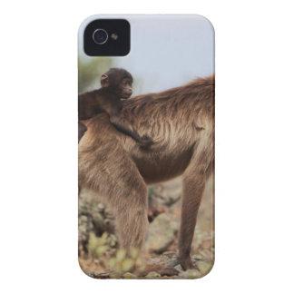 Coques iPhone 4 Case-Mate Babouin femelle de gelada avec un bébé