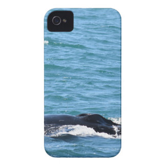COQUES iPhone 4 Case-Mate BALEINE DE BOSSE MACKAY QUEENSLAND AUSTRALIE