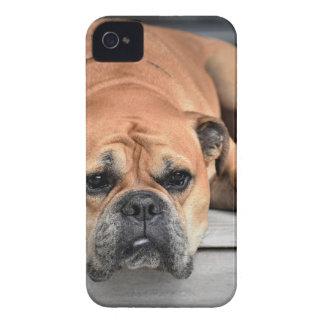 Coques iPhone 4 Case-Mate Chien de Taureau