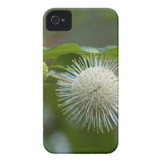 Coques iPhone 4 Case-Mate Fleur sauvage blanc de Buttonbush
