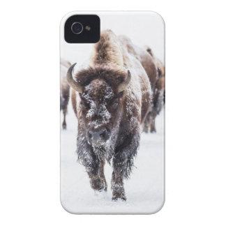 Coques iPhone 4 Case-Mate La neige a couvert le bison, le parc national en