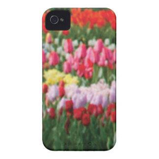 Coques iPhone 4 Case-Mate mélange de couleur de fleur