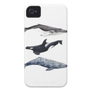 Coques iPhone 4 Case-Mate Orque, baleine bossue et baleine gris