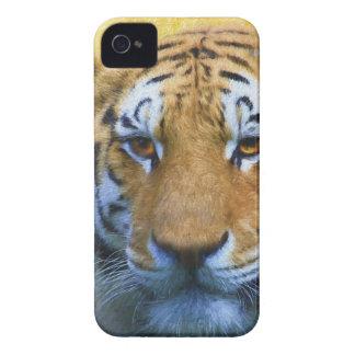 Coques iPhone 4 Case-Mate Tigre dans le bambou - peinture