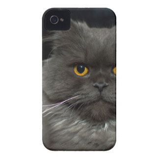 Coques iPhone 4 chat
