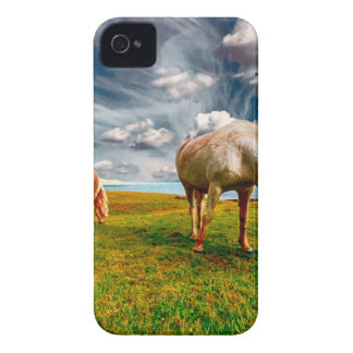 Coques iPhone 4 Chevaux sur un champ
