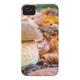 Coques iPhone 4 Pain d'écureuil de champignon avec le feuille dans