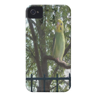 Coques iPhone 4 Perruche