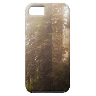 Coques iPhone 5 Arbres de séquoia en brouillard de matin avec des
