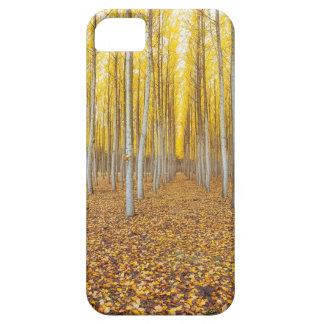 Coques iPhone 5 Case-Mate Ferme d'arbre de peuplier dans Boardman Orégon