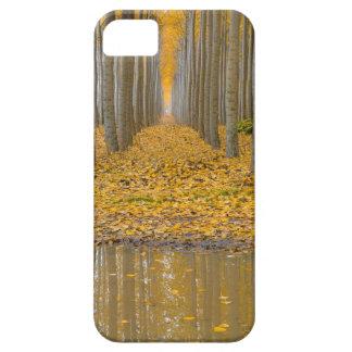 Coques iPhone 5 Case-Mate _MG_3099aReflection à la ferme d'arbre de peuplier