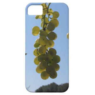 Coques iPhone 5 Case-Mate Raisins blancs sur la vigne contre le ciel bleu