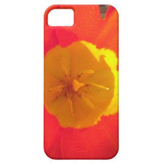 Coques iPhone 5 Fleur ouverte de tulipe de rouge et de jaune