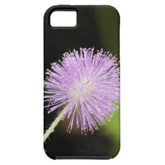 Coques iPhone 5 Plante sensible (pudica de mimosa)
