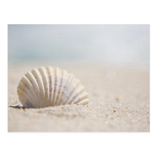 Coquillage de mollusque carte postale