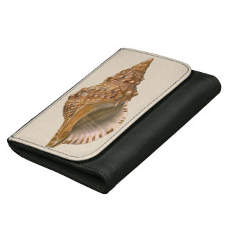Coquillage vintage Shell, animal marin de Triton