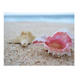 Coquillages sur la carte postale de plage