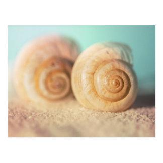 Coquilles de Nautilus sur la plage Cartes Postales