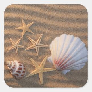 Coquilles et étoiles de mer de mer sticker carré