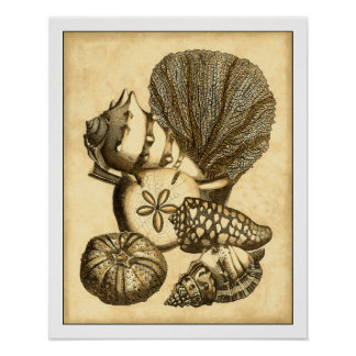 Coquilles neutres et collection de corail poster