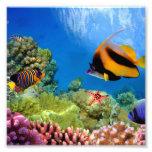 Corail coloré et poissons tropicaux