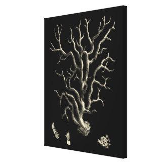 Corail noir et bronzage toile