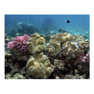 Corail, récif d'Agincourt, la Grande barrière de Carte Postale