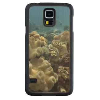 Corail, récif d'Agincourt, la Grande barrière de Coque Galaxy S5 En Érable