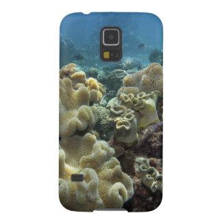 Corail, récif d'Agincourt, la Grande barrière de Coques Galaxy S5