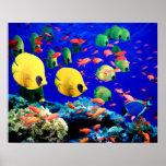 Corail sous-marin de mer et poissons tropicaux posters