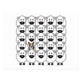 Corgi chez les moutons carte postale
