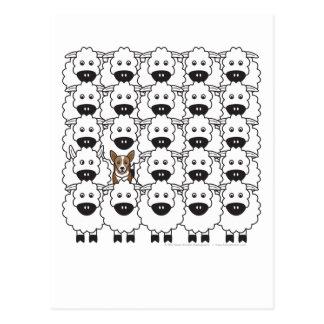 Corgi chez les moutons cartes postales
