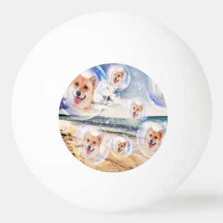 Corgis de plage balle tennis de table