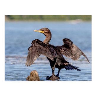 Cormorant Double-crêté sur le lac Champlain Carte Postale
