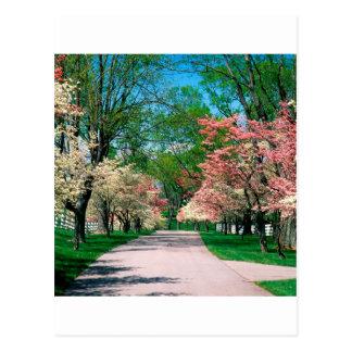 Cornouiller blanc rose Lexington Kentucky d'arbres Carte Postale