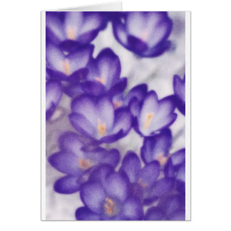 Correction de fleur de crocus de lavande carte de vœux